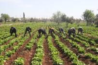Sınır Kentinde Korona Tedbirleri Arttırılıyor