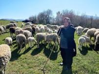 (Özel) Yalova'nın Kadın Çobanı 170 Hayvanlık Sürüye Bakıyor