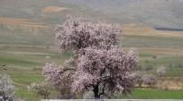 Gercüş'te Çiçek Açan Ağaçlar Kartpostallık Görüntüler Oluşturdu