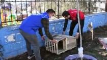 Şırnak'ta Esnaftan Toplanan Paletler Sokak Hayvanlarına Barınak Oldu