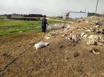 Mardin'de Sinek Ve Haşerelere Karşı İlaçlama Çalışması Başlatıldı