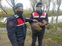 Ağaç Dallarına Takılan Balıkçılı Jandarma Kurtardı