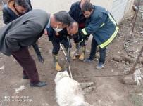 Ağzına Demir Saplanan Köpeği İtfaiye Ekipleri Kurtardı