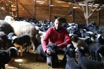 Artvinli Küçükbaş Üreticileri 'Hemşin' Irkından Vazgeçmiyor