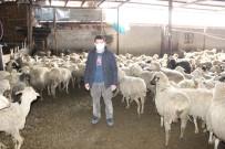 Karaman'da 21 Küçükbaşın Telef Olduğu Sürüdeki 579 Hayvanı Köylüler Kurtardı