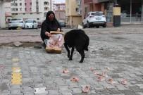 Kısıtlamalarda Hayvan Severler Sokak Hayvanlarını Unutmadı