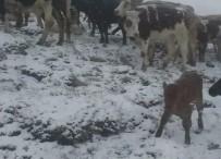 Yaylacılar Yoğun Kar Yağışında Mahsur Kaldı