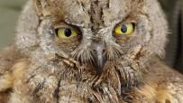 Baharın Gelmesiyle Yaban Hayvanlarında Hastalıklar Arttı