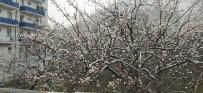 Çiçek Açan Kayısı Ağaçları Beyaza Büründü, Çiftçiyi Telaş Sardı