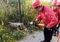 Demir Korkuluk İle Duvar Arasına Sıkışan Köpek Kurtarıldı