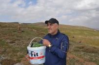 Muş'ta Baharın Müjdecisi 'Çiriş' Otu Geçim Kaynağı Oldu