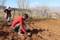 Siirt'te Çiftçinin 'Soğan' Mesaisi Başladı