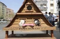 Yaralı Sokak Kedisi 'Peşo'yu Sahiplendi, Ona 5 Bin Lira Değerinde Dubleks Ev Yaptı