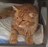 Bodrum'da Kediyi Kurşunladılar