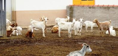 Bulut Açıklaması '18 Nisan Çoban Günü İlan Edilmeli'