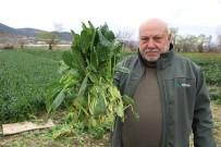 Ispanaklarını Satamayan Çiftçi Çağrı Yaptı Açıklaması 'Benim Ispanağımı Da Satın Alıp Halka Dağıtsınlar'