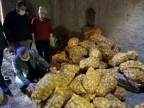 Niğde'den Patatesler Tırlarla Farklı İllere Gönderiliyor