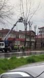 Ağaç Budayan Kişi Vinç Sepetinden Atlayarak Operatöre Saldırdı