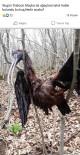 Çeltikçi Kuşu'nun Göçü Yarım Kaldı