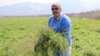 Doğadaki Şifa Deposu 'Çoban Çantası' Geçim Kaynağı Oldu