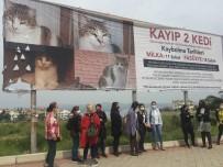Kaybolan İki Kedi İçin Kadınlar Seferber Oldu