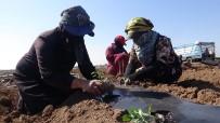 (Özel) Suriye Sınırında Biber Fideleri Toprakla Buluşmaya Başladı