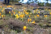 Baharın Müjdecisi Çiğdemler Açtı