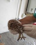 Bitkin Halde Bulunan Kukumav Kuşu Tedavi Altında