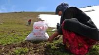Havaların Isınmasıyla Kadınların Pancar Mesaisi Başladı