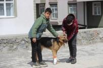 İşkence Edilen Köpeğe Çocuklar Sahip Çıktı