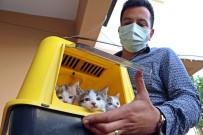 Kahraman Kedi, Yavrularını Korumak İçin Kendini Feda Etti