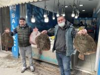 Karadeniz'de Kalkan Balığı Bereketi Açıklaması Kilosu 200 TL
