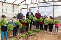(Özel) Minikler Serada Organik Sebze Yetiştiriyor