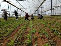 Denizli'de Sera Alanları Ve Ürün Çeşitliliği Artış Gösterdi
