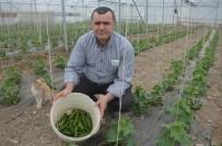 Öğretmenliği Bıraktı, Çiftlik Kurdu