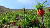 Sarp Dağlarda Açan Ters Laleler Göz Kamaştırıyor