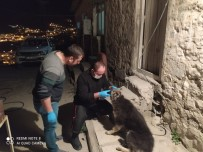 Yaralı Çoban Köpeği Tedavi Altına Alındı