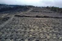 Bolu'da, Yangında Zarar Gören 136 Hektarlık Alan Ağaçlandırılacak