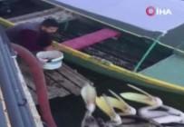 Bursa'da Bir Balıkçı Elleriyle Pelikanları Besledi