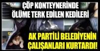 Çöp konteynerında ölüme terk edilen kedileri Ak Partili belediyenin çalışanları kurtardı!