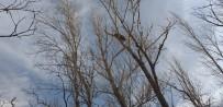 Köpeklerde Korkan Vaşak Ağaca Tırmandı