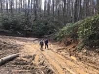 Orman Müdürlüğü Kesilen Ağaçları Yerinde İnceledi