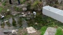 Artvin'de Kaderine Terk Edilmiş Tarihi Kaplıca İlgi Bekliyor