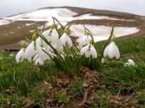 Baharın Habercisi Beyaz Kardelenler Çiçek Açtı
