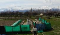 (Özel) Erzincan'da Kıştan Çıkan Bal Arıları Açan Çiçeklerle Buluştu