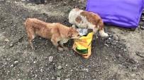 Sahipsiz Sokak Hayvanlarına Mama Yetiştirmekte Zorlanıyorlar