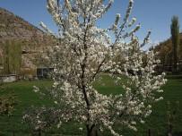 Çiçek Açan Ağaçlar Havadan Görüntülendi