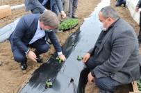 Anadolu'nun Çukurovası'nda Fideler Toprakla Buluştu