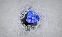Kar Ve Çiçeklerin Buluşması Hayran Bıraktı