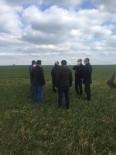 Kırklareli'nde Buğday Arazileri İncelendi
